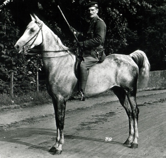 On-horseback