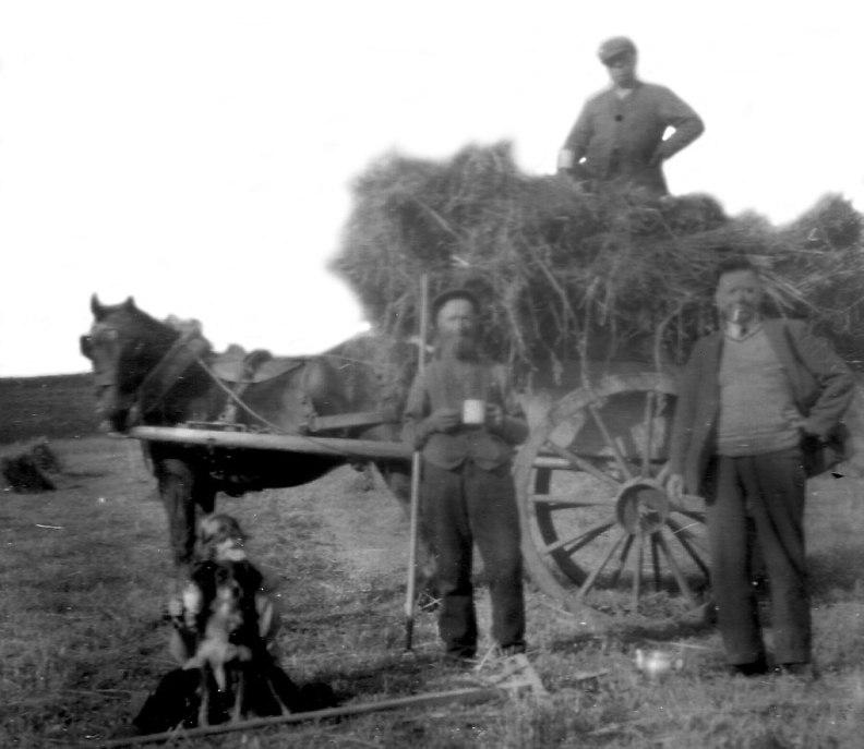 Camlet-harvest