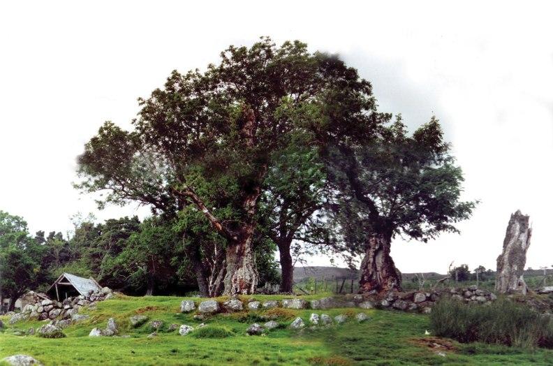 kail-trees