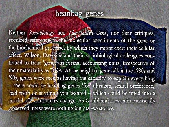 Bean-bag-genes