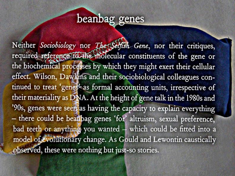 Bean-bag genes