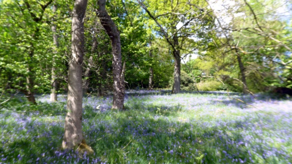picnic-in-lecropt-woods-15-may-2016-4