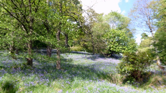 picnic-in-lecropt-woods-15-may-2016-5