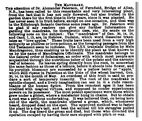 The-Mandrake-1894